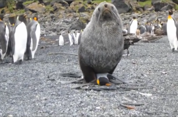 And the other penguins do NOTHING.
